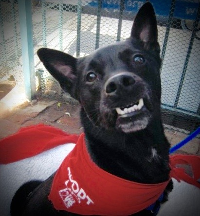 A photo of a black dog that is at adoption day.
